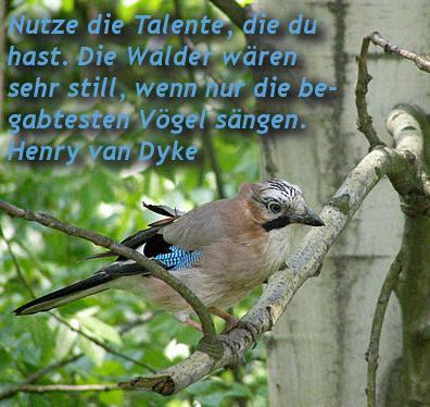 talente.jpg