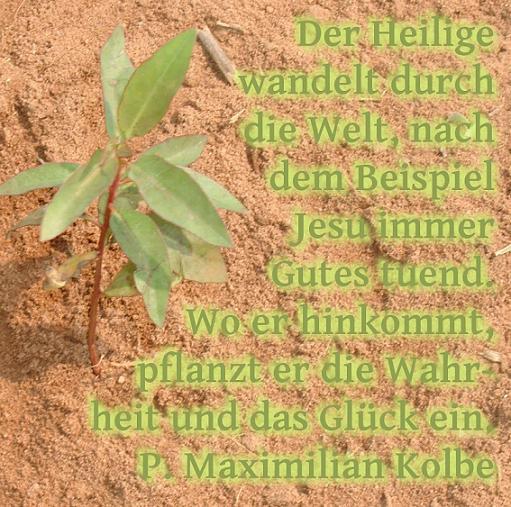 kolbe_pflanze.jpg