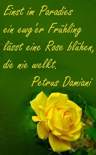 Damiani_Rose