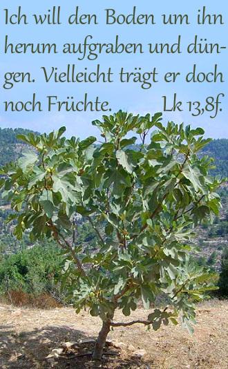 FC3_Feigenbaum